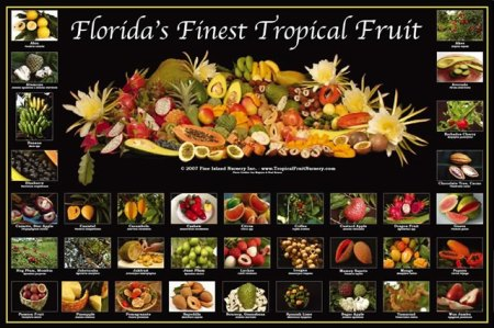 tropical-fruit-poster-pin